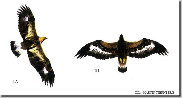 tecknade flygande fåglar